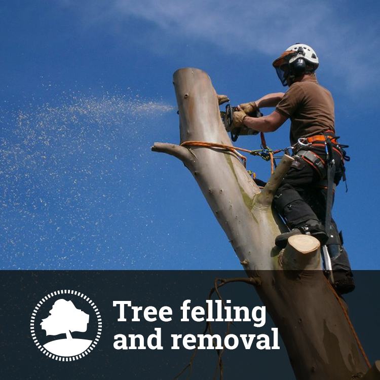 Tree Felling and Removal Solutions