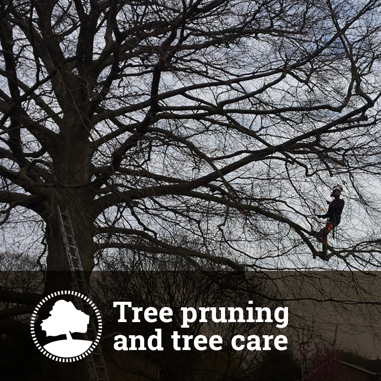 Tree Pruning and Tree Care Solutions