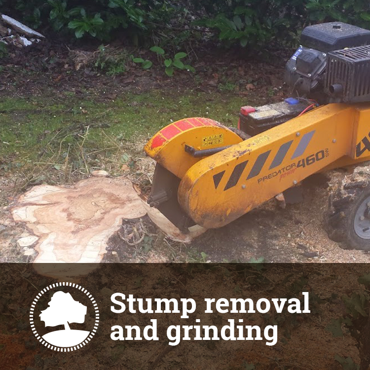 Tree Stump Removal Solutions